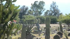 Garden at Mitla archeological site Stock Footage