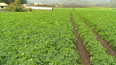 Agriculture, farm field on cloudy day, Panama highlands Stock Footage