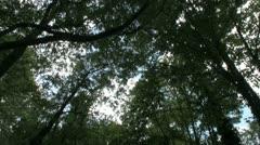 Urban woodland forest path Stock Footage