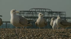 Old abandoned pier and seagulls two in Brighton Stock Footage