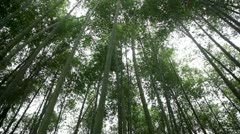 Bamboo grove Stock Footage
