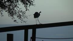 Blue heron at sunset Stock Footage