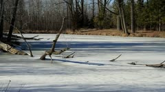 Down Tree in Frozen Pond Stock Footage