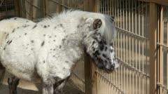 Pony2 Stock Footage