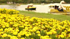 Yellow marigold swaying in the evening at puplic park - stock footage