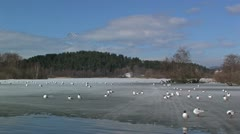 Stock Video Footage of Gulls at Bird Reserve