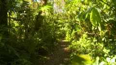 Nature, walking through jungle along a path, POV Stock Footage