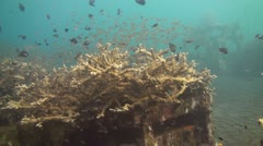 Artificial reef Stock Footage