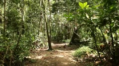 Rain Forest (Walking with a Monkey on a pathway) - stock footage