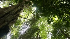 Rainforest Stock Footage