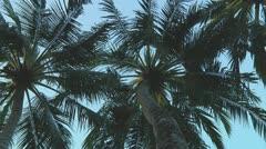 Palmtrees - stock footage
