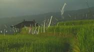Rice terrace Stock Footage