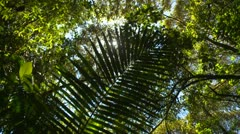 Nature, jungle canopy high angle with fern, nice sun glints Stock Footage