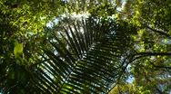 Stock Video Footage of jungle canopy high angle with fern, nice sun glints