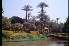 Fayoum Oasis,  canals, palms, medium shot Stock Footage