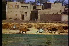 Fayoum Oasis, wide shot village, mud brick buildings, threshing wheat Stock Footage