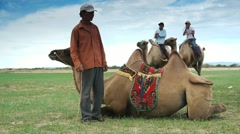 Riders of camels in Mongolia - stock footage