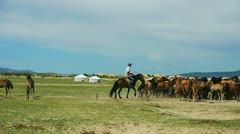 Shepherd caught the horses in the mountains of Mongolia Stock Footage