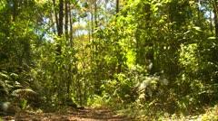 Nature, jungle wide shot, Panama Stock Footage