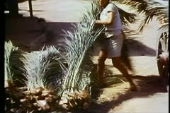 Fayoum Oasis, boy loads palm fronds onto donkey, wide shot Stock Footage
