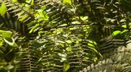 Nature, ferns, jungle, in still air, some shadows moving, Stock Footage