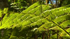 Nature, ferns in a light breeze, jungle Stock Footage