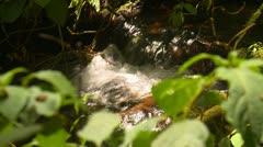 Nature, jungle stream with undergrowth in foreground Stock Footage