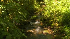 Jungle stream with heavy undergrowth, Latin America Stock Footage