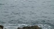 CA Montery Birds on Rocks 3 Stock Footage