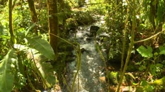 Jungle stream short pan, dense rainforest Stock Footage