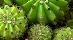 Succulent cactus detail Stock Footage