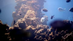 Rocky seabed and fish Stock Footage