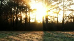 Glimmering Sunrise through forest Stock Footage
