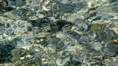 Sea and pebbles slow motion Stock Footage