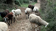 Sheeps running Stock Footage