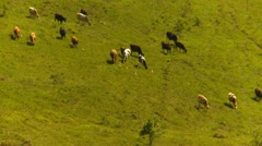 Agriculture, small cattle herd moving across valley floor Stock Footage