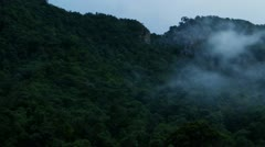 Stock Video Footage of Jungle misty time-lapse
