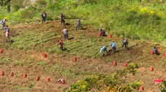 agriculture, farm workers on steep slope, Panama highlands - stock footage