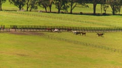 Horse ranch corrals, Guadelupe, Panama highlands Stock Footage