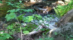 Gentle Mountain Stream in CA - stock footage