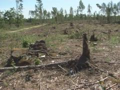 Deforested area Stock Footage