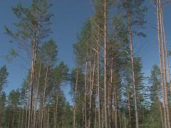 Forest recreation area Stock Footage
