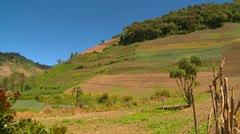 Agriculture, steep hillside veggie crops Stock Footage