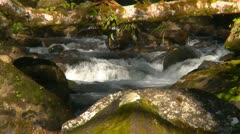 Stock Video Footage of jungle stream - (longer clip available), #3