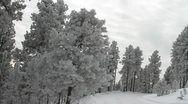 Icy trees and road Stock Footage