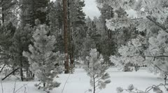 Looking deep into a forest of ice covered trees Stock Footage