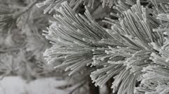Ice crystal covered pine branch CU Stock Footage