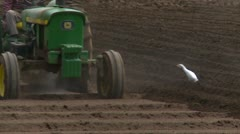 Agriculture, tractor tilling soil with Cattle Egrets looking for food Stock Footage