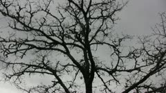 Tree Silhouette 03 Stock Footage