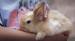 Caressing Rabbit - stock footage
